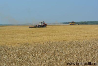 Уборка пшеницы. Курск.